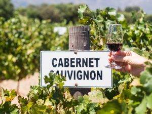 About Cabernet Sauvignon