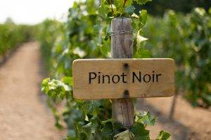 About Pinot Noir