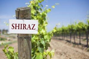 About Shiraz Wine